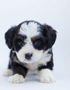 Puppy to compare to ROi