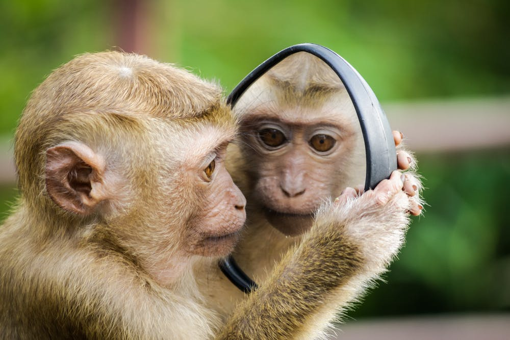 We Are Both The Monkey And the Robot. And We Are Gorgeous.